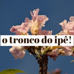 o tronco do ipe